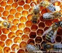Хочу заняться пчеловодством