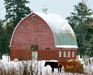 зимняя ферма, подготовка фермы к зиме