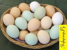 Куриные яйца: вред и польза. Употребление куриной скорлупы. Полезные и вредные свойства куриных яиц.