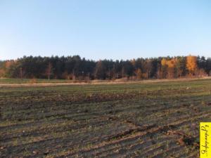 Земля сельхозназначения. Как можно и как нельзя использовать земли сельскохозяйственного назначения.