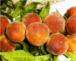 персики, фото