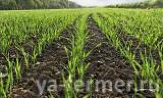 Работа аграриев Татарстана нацелена на повышение продуктивности пашни и доходности гектара