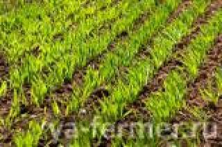 Агрострахование для татарстанских фермеров будет стоить 0 рублей