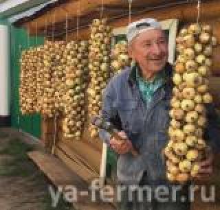 Сельские жители Татарстана, получившие бесплатные семена, радуются хорошему урожаю