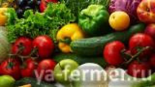 В Татарстане увеличат производство картофеля и овощей
