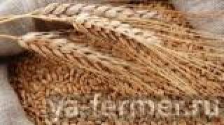 Татарстанские мукомолы, животноводы и сельхозпроизводители могут подать заявку на приобретение зерна из интервенционного фонда по сниженным ценам