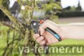Как ухаживать за садовыми инструментами
