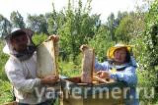 Будем здоровы: Никто не может столько рассказать о пользе меда и пчелах, как династия профессиональных пчеловодов