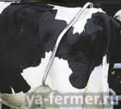 Антибрык для коровы отзывы.