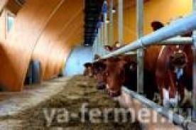 Беспривязное содержание скота.