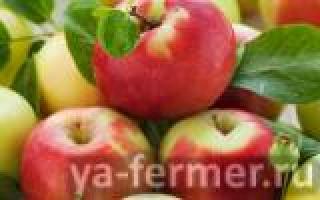 Россельхозбанк выпустит карты с региональными продуктовыми брендами. Краснодарский край предложил свои варианты: картофель, яблоки и вино