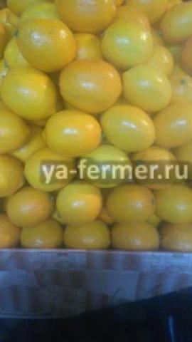 Лимон от 20 тонн из Абхазии