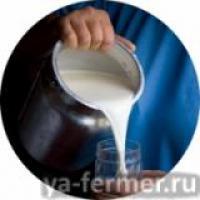 Соматические клетки в молоке