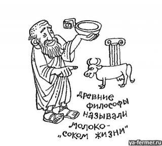 Древние философы называли молоко соком жизни.