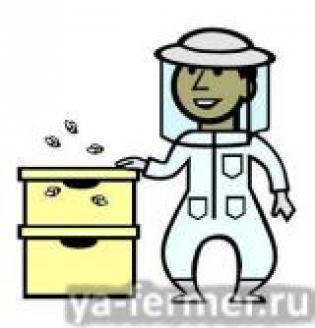 Пчеловодство: с чего начать? Сколько ульев купить для начала?
