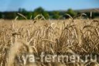 В Татарстане собран четвертый миллион тонн зерна нового урожая