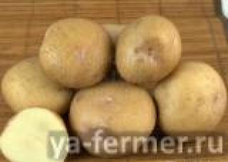 Семенной картофель Синеглазка (элита, суперэлита) от СеДеК.