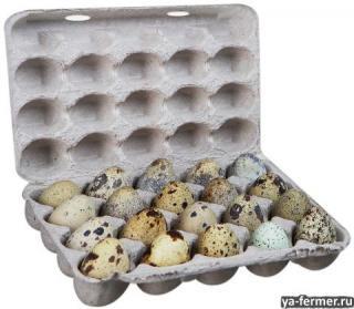 Упаковка для перепелиных яиц.