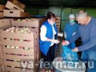 Фермер из Буинского района раздал более полутонны урожая яблок пенсионерам
