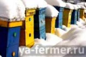 Как подготовиться к зимовке пчёл