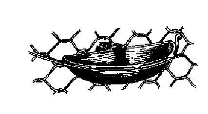 Поилка для ондатры на двери клетки