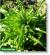 Сочная зелень и пряный аромат