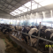 Туманообразующая система для охлаждения животноводческих ферм