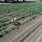 Компания Corteva Agriscience одной из первых в мире использует маневренных мобильных роботов для передвижения между рядами посевов