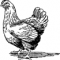 Если курица запела петухом