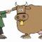 Корова выбрала свободу и ушла жить к бизонам