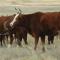 Интенсивный откорм скота в Зимовниках