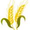 Зерно хранилось 2000 лет