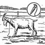 Содержание пуховых коз
