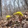 Ранневесенние пыльценосные растения Приморья