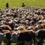 Технологическая линия «ферма — поле»