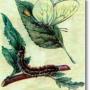 Боярышница – опасный вредитель в вашем саду