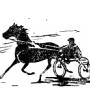 О подготовке конкурсных лошадей