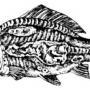 Бактериально-вирусные болезни рыб