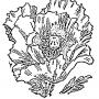 Мак: описание, расположение и почва, высадка и размножение