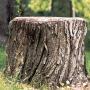 Как избавиться от деревьев и пней на участке