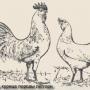Основные породы кур
