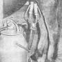 Электромеханическое доение кобыл