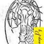 Тропилелапсоз
