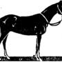 Результаты оценки тувинской упряжной (верхне-енисейской) породной группы лошадей