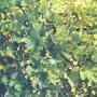 Растения весеннего цветения, использующиеся в озеленении средней полосы России