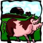 Заболевания свиней и помощь при них