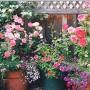 Выращивание роз в закрытом грунте