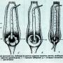 Медоносы семейства бобовых