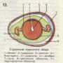 Образование и строение яиц