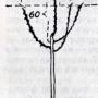 Обрезка плодовых деревьев в различные периоды
